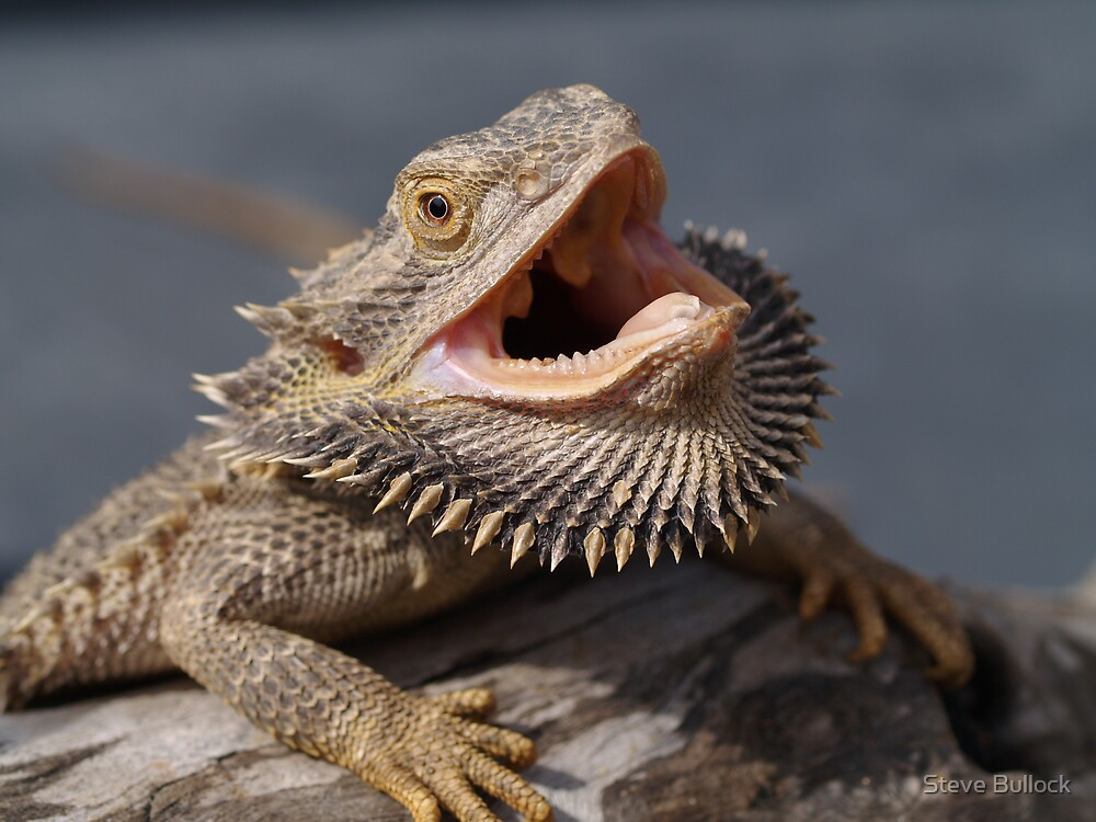 Tips for Calming Down and Destressing Bearded Dragons