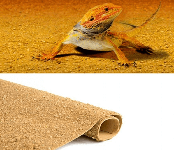 How to clean bearded dragon carpet?