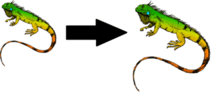 How-To-Make-Iguana-Grow-Faster-Advice-and-Tips