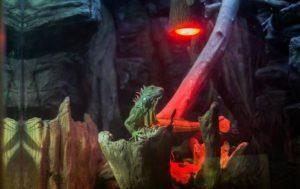 Top-Heat-Lamp-for-Iguanas-Reviews
