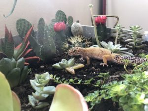 Best Safe Plants For Leopard Geckos