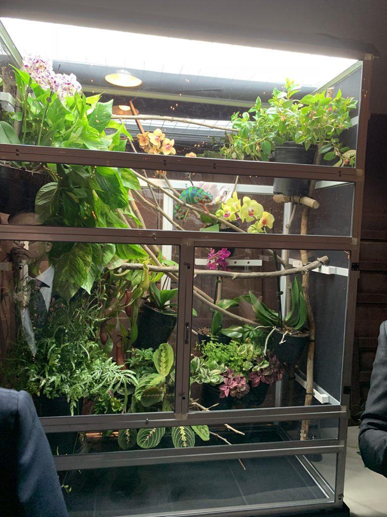 Chameleon cage