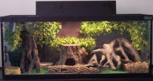 Leopard Gecko Terrarium Needed