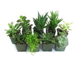 Safe Plants For your Pet Leopard Geckos