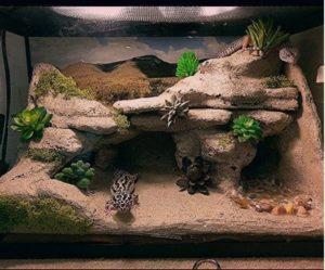 Setup Leopard Gecko Terrarium