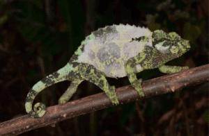 Ways To Help Chameleons Shed