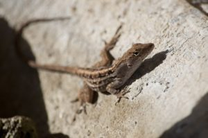 Care For Brown Anoles