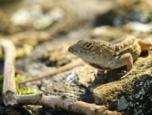 Ways to Care For Brown Anoles