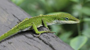 Top 5 Substrate For Anoles