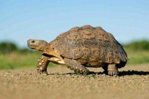 Are Tortoises good-pet
