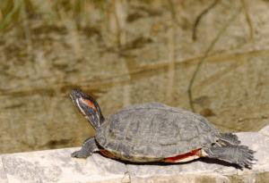 How To Moisturize A Turtle's Shell
