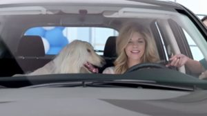 How To Transport-Afghan-Hound In-Car