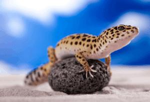 Are Leopard-Geckos Smart