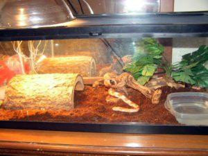 Corn-Snake Terrarium Requirements