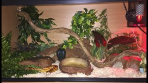 Corn Snake Terrarium Requirements