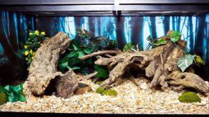 Decorating Your Corn-Snake Terrarium