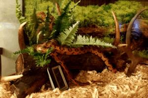 How To Set Up A Corn-Snake Tank