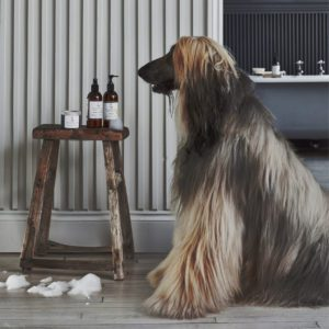 How To Wash Afghan-Hound