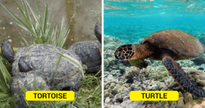 A Turtle And A Tortoise
