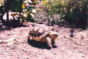 Things to Know Before Buying a Tortoise