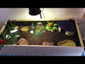 Tortoise Tables SetUp
