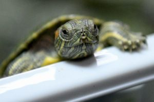 Turtles Guide