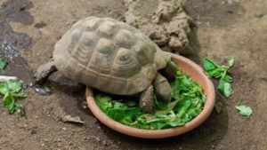 What-Do Tortoises Eat