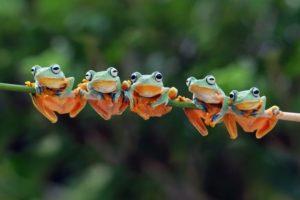 Popular Pet Frogs For Beginners